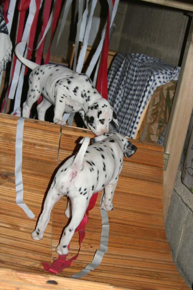 Kennenlernen zweier hunde