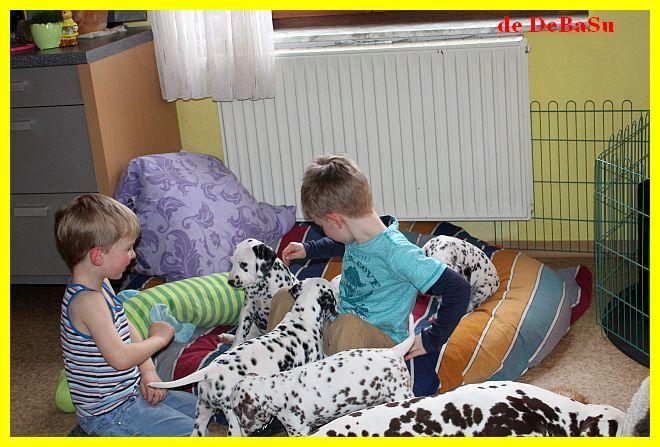 dalmatiner und weisse schweizer sch ferhunde 8 woche. Black Bedroom Furniture Sets. Home Design Ideas